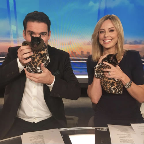 Peter Stefanovic and Allison Langdon - Weekend Today