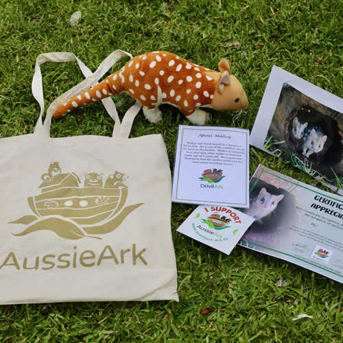 Quoll gift pack