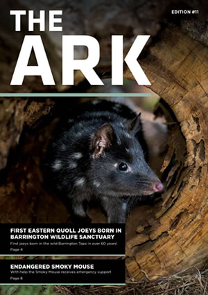 Ark Issue 11
