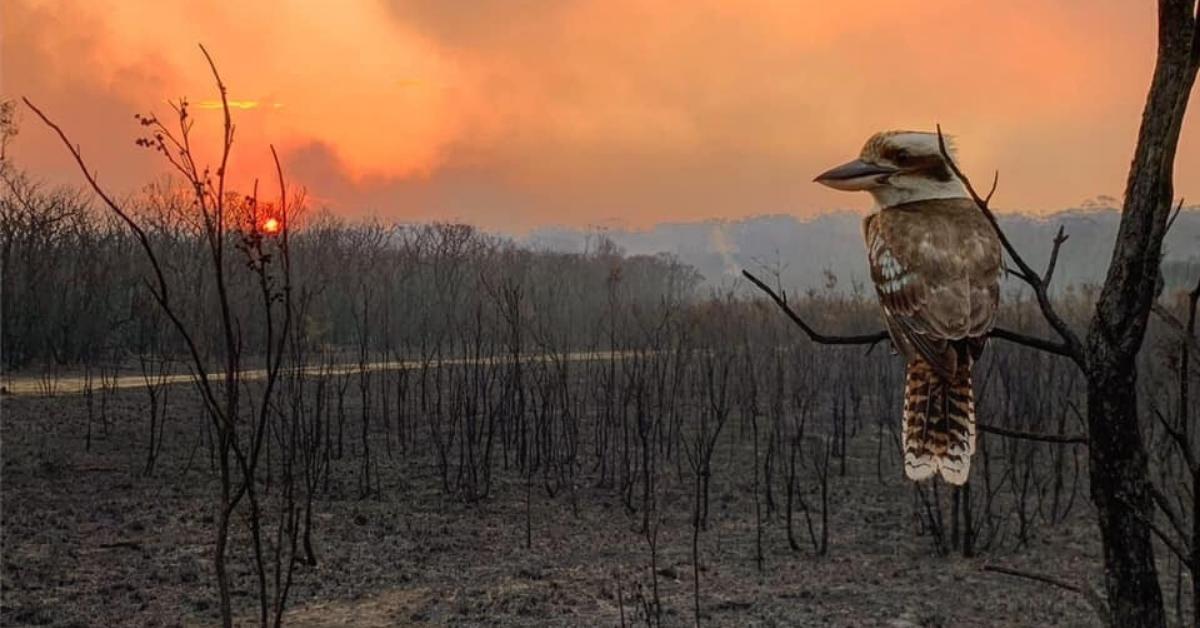 Aussie Wildlife Bushfire Appeal