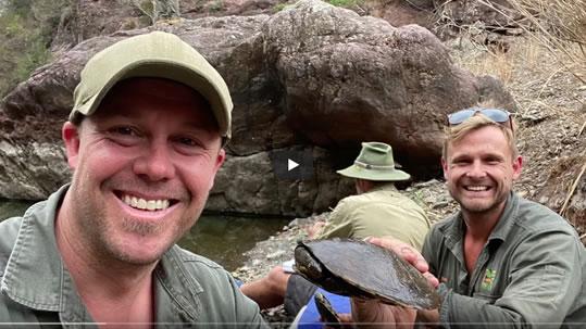 manning river turtles