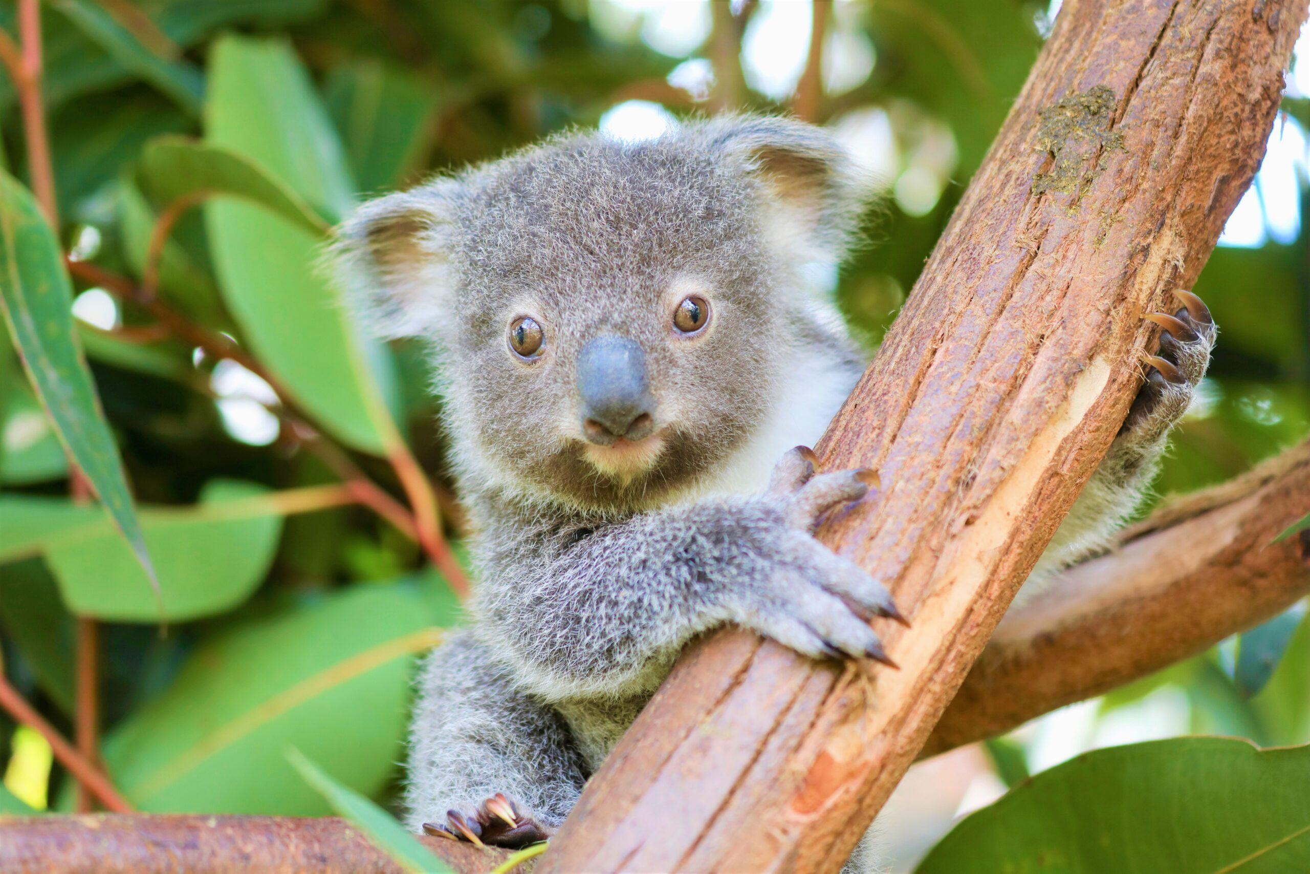 AUSTRALIAN WILDLIFE ACTIVITY PACK!